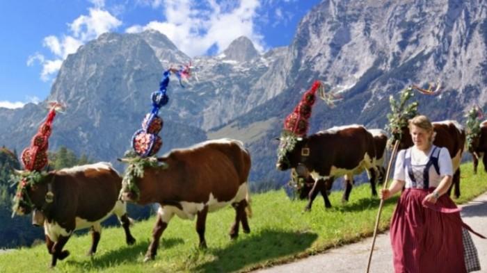 Almabtrieb Berchtesgadener Land